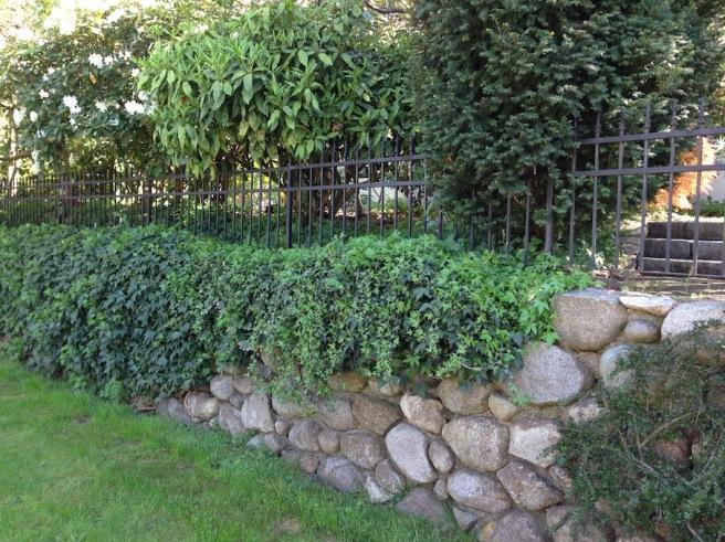 Hedge 6