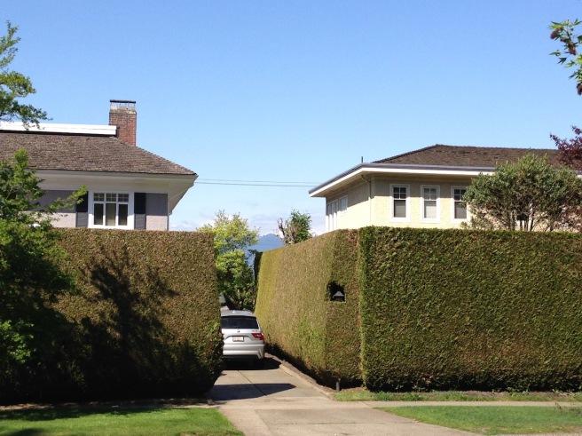 Hedge 7