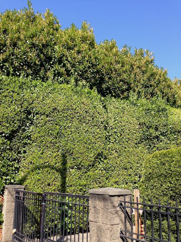 Hedge 9