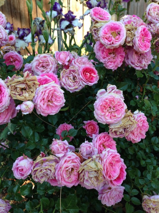 Flower staus pre-pruning
