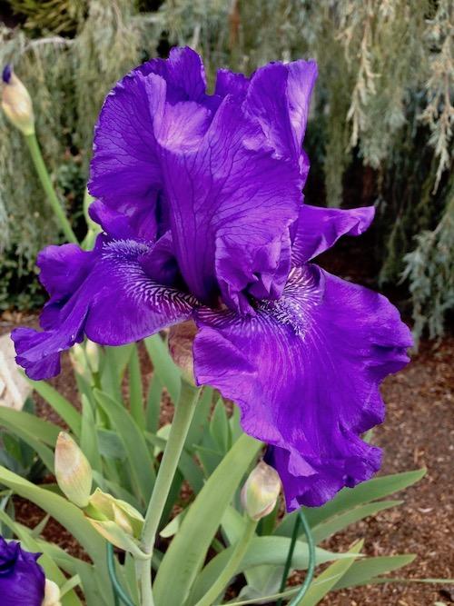 bloom alert 1