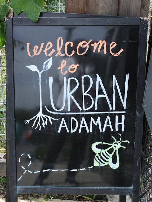 Adamah 1